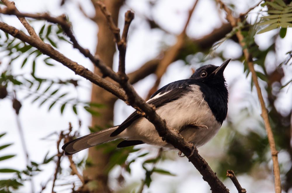 birds in central park kolkata
