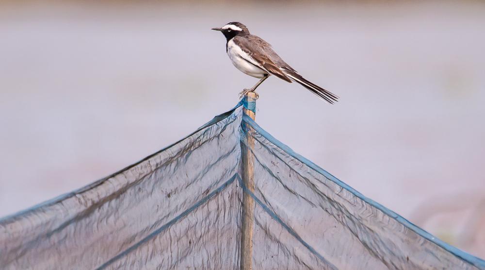 birds in purbasthali, Purbasthali bird sanctuary