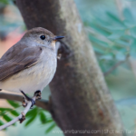 My introduction to Birding.