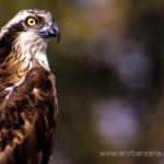 The Birders' weekend destination – Purbasthali Bird Sanctuary.
