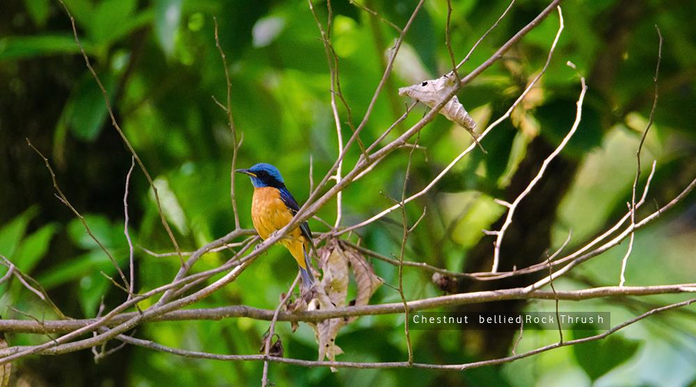 birding blogging trek