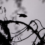 What's a Birding – Blogging Trek?