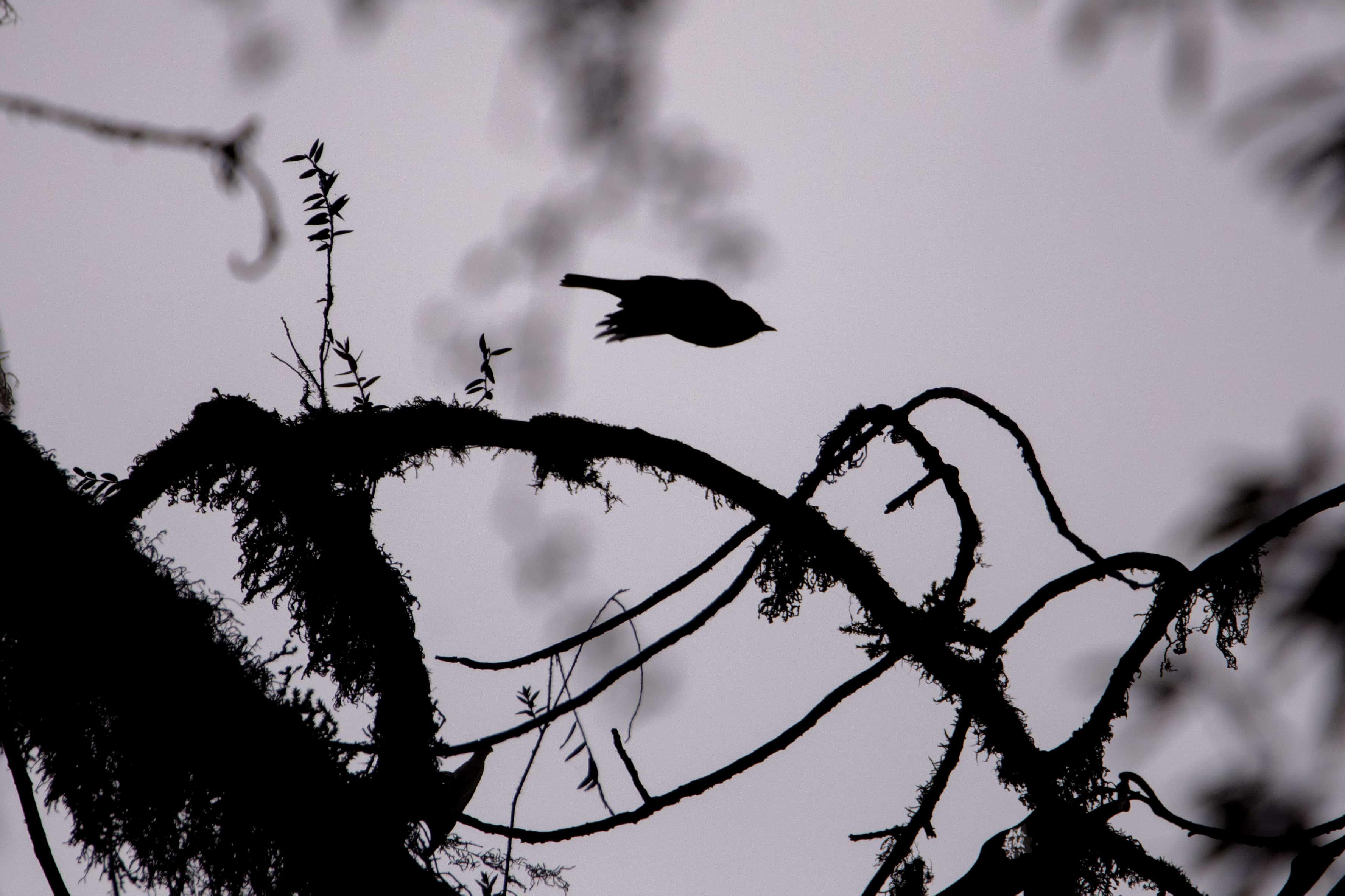 birding blogging trek, kolkata bloggers