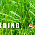 Birding should be treated separate from Wild Life. Here's why!