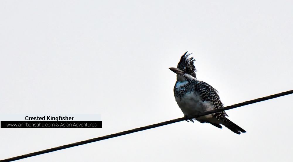 Crested Kingfisher, birding sattal pangot,pangot sattal birding, pangot sattal blog, uttarakhand tourism, uttakhand birding