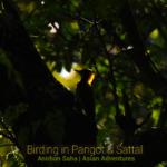 Birding in Pangot, Sattal and in Dhikuli.