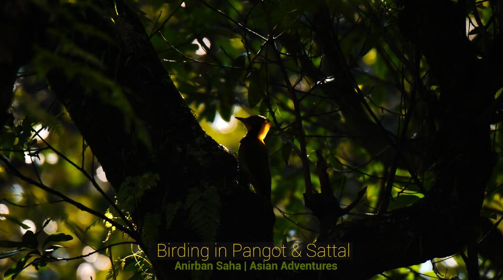 pangot sattal birding blog