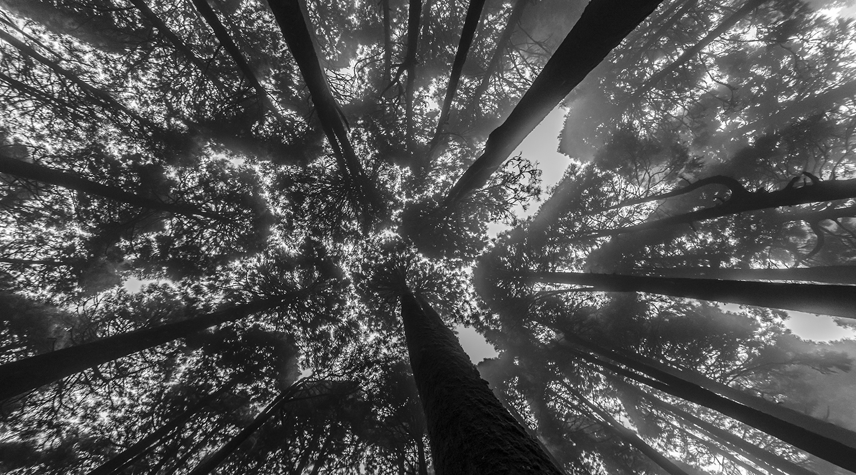 sikkim forest