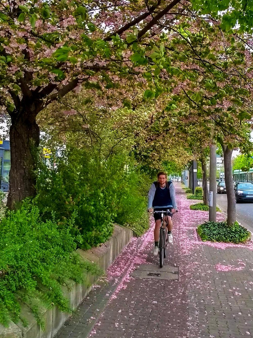 magdeburg, flowers, spring