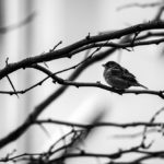 Finding Birds in Magdeburg, Germany.