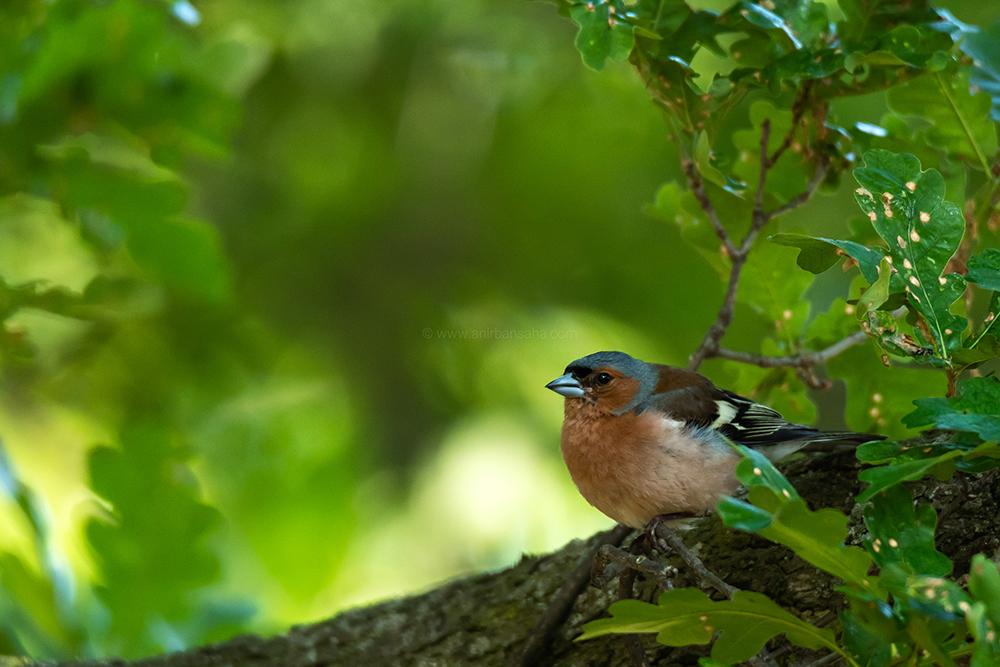 birding in magdeburg, birding in germany
