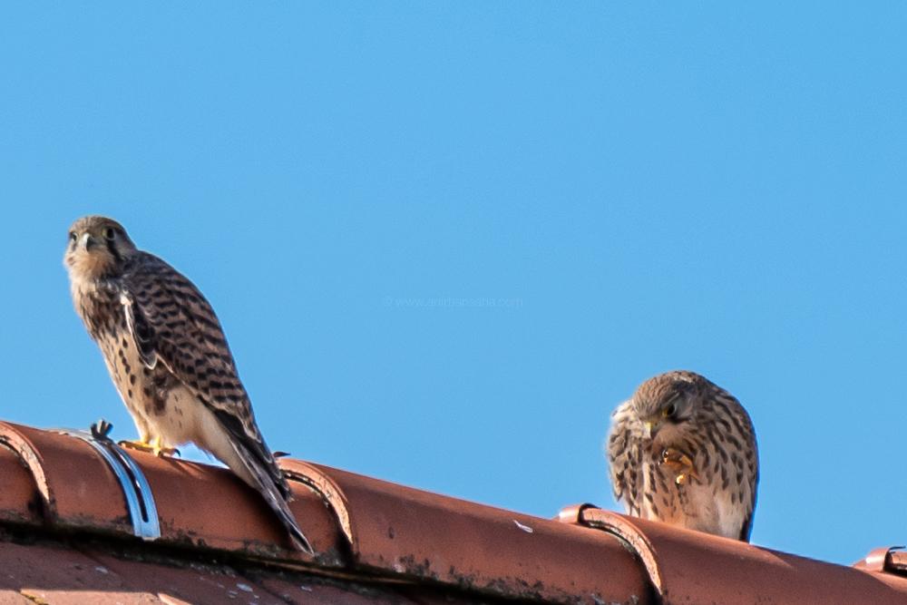 birding in Germany, birding in Magdeburg