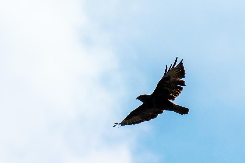 kite, magdeburg, germany