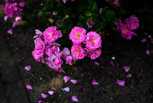 magdeburg flowers