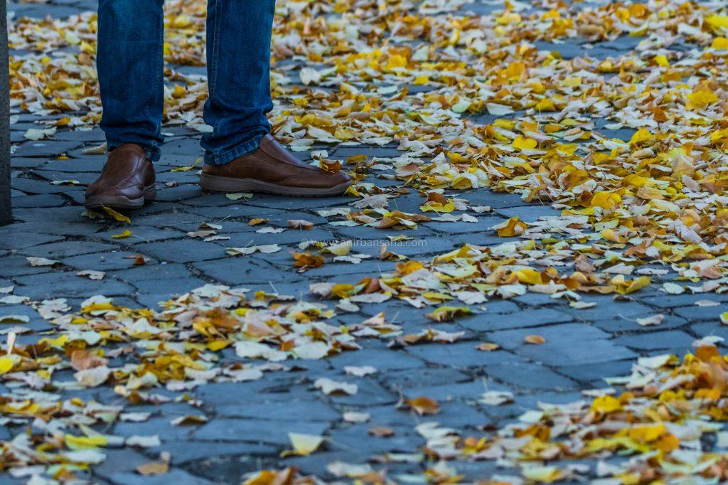 autumn in magdeburg