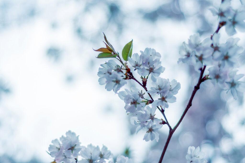 spring in magdeburg